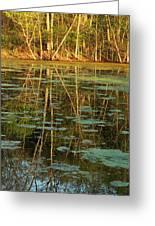 Evening Light On Missouri Pond 2 Greeting Card