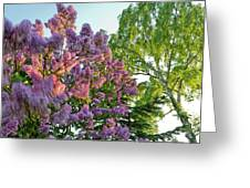 Evening Lilac Greeting Card