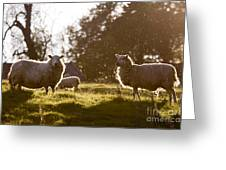 Evening On The Meadow Greeting Card