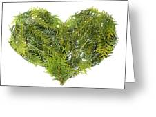Evergreen  Coniferous Christmas Trees Heart Isolated Greeting Card
