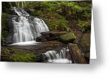 Evergreen Steps Greeting Card