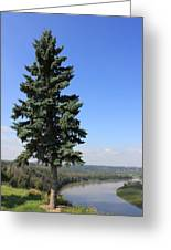 Evergreen Tree Beside The River Greeting Card