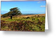 Exmoor's Heather-covered Hills Greeting Card