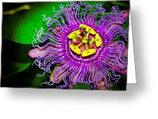 Exotic Flower Greeting Card