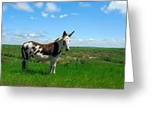 Exotic Mule In Montana Greeting Card