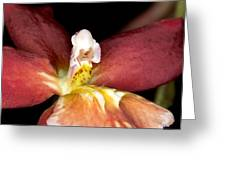 Exotic Orchid Bloom Greeting Card