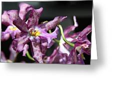 Exotic Orchids Greeting Card