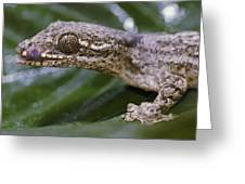 Extreme Close-up Of A Gecko In The Rain Greeting Card
