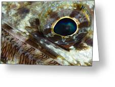 Extreme Close-up Of A Lizardfish Greeting Card