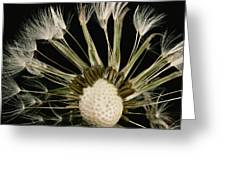 Extreme Close-up Of The Seedhead Greeting Card