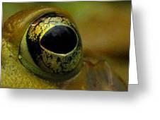 Eye Of Frog Greeting Card
