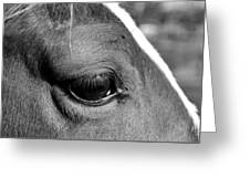 Eye Of The Horse Black And White Greeting Card