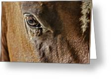 Eye Of The Horse Greeting Card