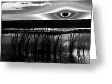 Eye Over Everglades Greeting Card