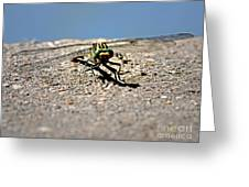Eye To Eye With A Dragonfly Greeting Card