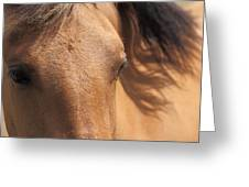 Eyes Of A Brown Horse Greeting Card