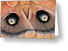 Eyes Of Deception Greeting Card by Peg Urban