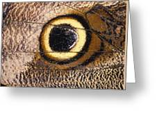 Eyespot On Wing Of Butterfly, Eriphanis Polyxena Greeting Card
