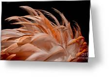 Fabulous Flamingo Feathers Greeting Card