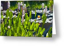 Fabulous Water Hyacinth  Greeting Card