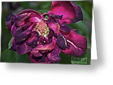Fading Bloom Greeting Card