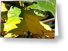 Fading Into Fall Greeting Card