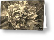 Fading Rose Greeting Card