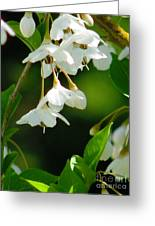 Faerie Bells 2 Greeting Card