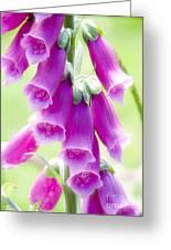 Faerie Bells Greeting Card