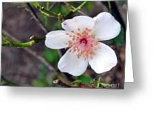 Fairy Crystal Rose-vi Greeting Card