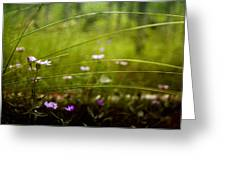 Fairy Meadow Greeting Card