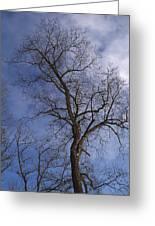 Fairy Tale Tree Greeting Card