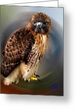 Falco 2 Tinnunculus Vf Greeting Card