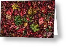 Fall Autumn Leaves Greeting Card by John Farnan