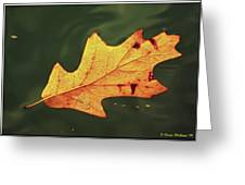 Fall Away Greeting Card