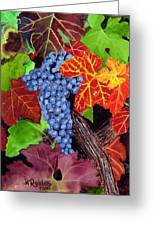 Fall Cabernet Sauvignon Grapes Greeting Card