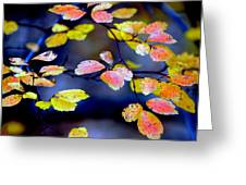 Fall Color Change Greeting Card