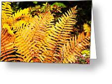 Fall Color Cinnamon Fern Greeting Card