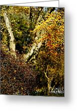 Fall Color Wall Art Landscape Greeting Card