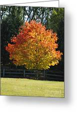 Fall Colored Tree Greeting Card