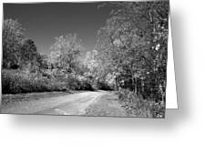 Fall Colors In Black And White Greeting Card