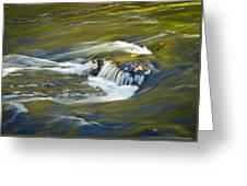 Fall Colors In River Rapids Greeting Card