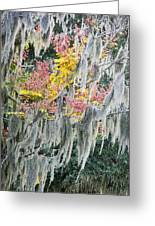 Fall Colors In Spanish Moss Greeting Card