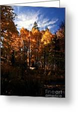Fall Colors Taylor Creek. Greeting Card
