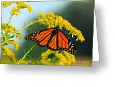 Fall Colour Greeting Card