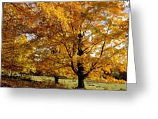 Fall Colours In Eastern Townships Greeting Card