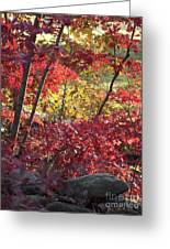 Fall Comes To New England Greeting Card