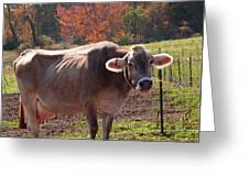 Fall Cow Greeting Card