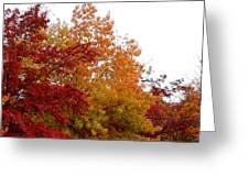 Fall Filled Sky Greeting Card