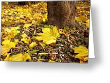 Fall Floor Greeting Card